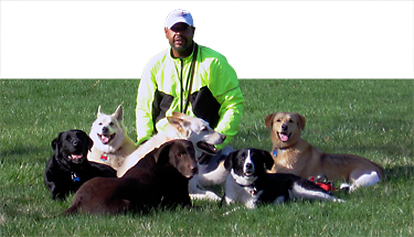 how to become a certified dog trainer in ohio