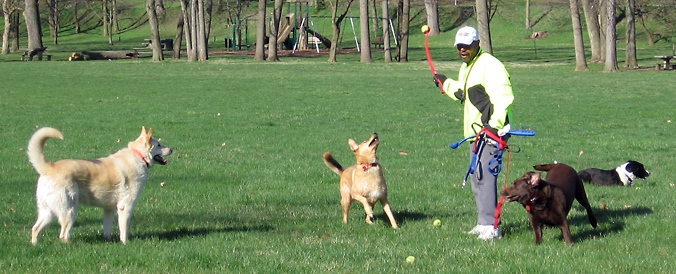 Unleashed and in control...Rick maintains order while still entertaining his canine customers.